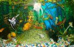 Самые красивые аквариумные рыбки: фото-видео обзор – домашняя аквариумистика