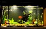 Дизайн аквариума на 100 литров – домашняя аквариумистика