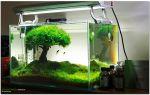 Дерево жизни в аквариуме! – домашняя аквариумистика