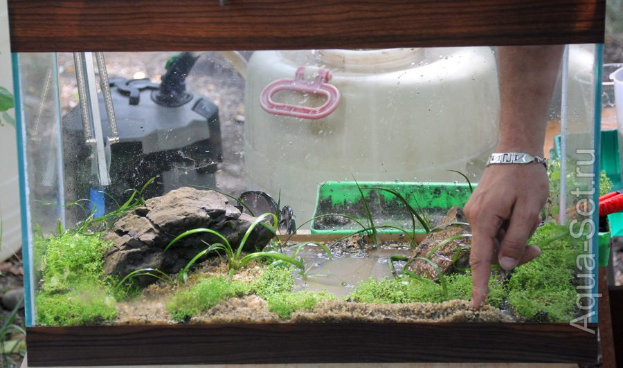 Запуск аквариума пошаговая инструкция с фото