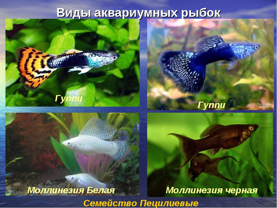 Фото и названия всех аквариумных рыбок
